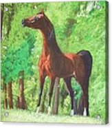 Arabian Horse In A Forest Clearing Acrylic Print