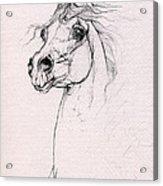 Arabian Horse Portrait 2014 02 25 Acrylic Print