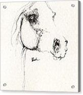 Arabian Horse Sketch 2014 05 24 Acrylic Print