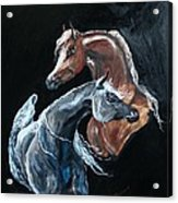 Arabians Acrylic Print