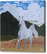 Araboam Stallion 3 Acrylic Print