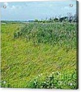 Aransas Nwr Coastal Grasses Acrylic Print