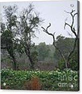 Aransas Nwr Landscape Acrylic Print