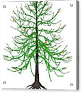 Araucaria Prehistoric Tree Acrylic Print