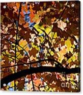 Arboretum Fall Acrylic Print