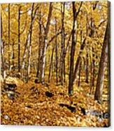 Arboretum Trail Acrylic Print