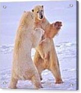 Arctic Dance Acrylic Print