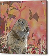 Arctic Ground Squirrel In Autumn Colors Abstract Acrylic Print