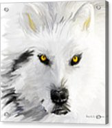 Arctic Wolf With Yellow Eyes Acrylic Print