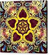 Arcturian Starseed Acrylic Print