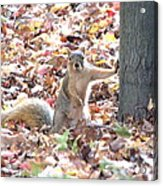 Are You Looking At Me ? Acrylic Print