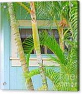 Areca Palms At The Window Acrylic Print