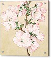 Ariake - Daybreak - Vintage Japanese Watercolor Acrylic Print