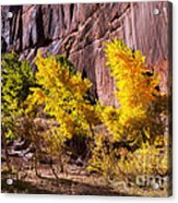 Arizona Autumn Colors Acrylic Print