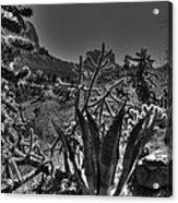 Arizona Bell Rock Valley N9 Acrylic Print