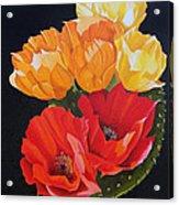 Arizona Blossoms - Prickly Pear Acrylic Print