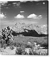 Arizona Desert #1 Acrylic Print