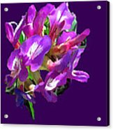 Arizona Desert Flowers Acrylic Print