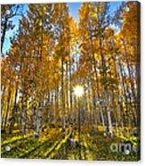 Arizona Gold Acrylic Print