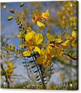 Arizona Gold Acrylic Print