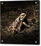 Arizona Horned Lizard Acrylic Print