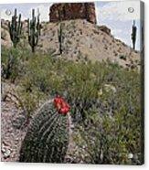 Arizona Icons Acrylic Print