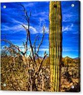 Arizona Landscape IIi Acrylic Print