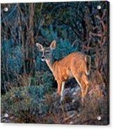 Arizona Deer Sunset Acrylic Print
