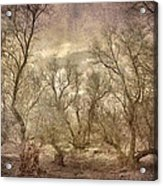 Arms Ghost Forest Acrylic Print