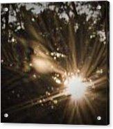 Arms Of The Sun Acrylic Print