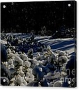 Army Of Trees Acrylic Print by Tim Rice