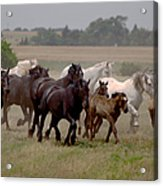 Arrington Ranch Herd - 2 Acrylic Print