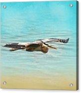 Arrival - Blue Heron - Wildlife Acrylic Print