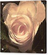 Arrosa Acrylic Print