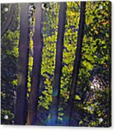 Art In The Woods Acrylic Print by Donald Torgerson