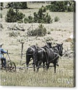 Art Of Horse Plowing Acrylic Print