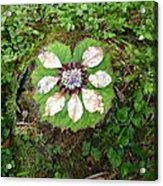 Art Of The Woods 2 Acrylic Print