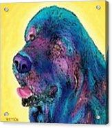 Arthur  Acrylic Print