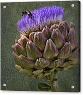 Artichoke Bloom And Bee Dip Acrylic Print