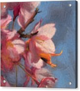 Artisic Painterly Cherry Blossoms Spring 2014 Acrylic Print