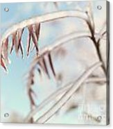 Artistic Abstract Closeup Of Frozen Tree Branches Acrylic Print