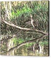 Artistic Drying Cormorant- Black Bird Sitting On Log Over Water Acrylic Print