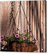 Artistic Hanging Basket Of Petunias Acrylic Print