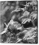 artistic painterly Black and white monochromatic two dogroses summer 2014 Acrylic Print