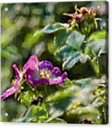 Artistic Painterly Two Dogroses Summer 2014. Acrylic Print