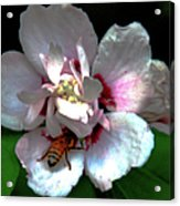Artistic Shades Of Light And Pollinating Bee Acrylic Print