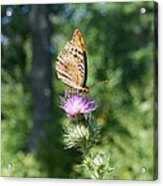 Artistic Butterfly Stand  Acrylic Print