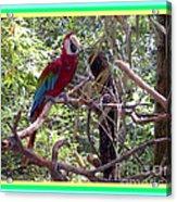 Artistic Wild Hawaiian Parrot Acrylic Print