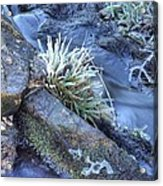 Artistry In Ice 19 Acrylic Print