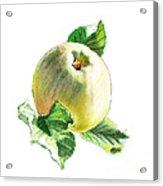 Artz Vitamins Series A Happy Green Apple Acrylic Print
